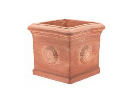 Cubo 010 with rosette terracotta pot